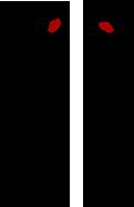 ダイチミウラ コラボ